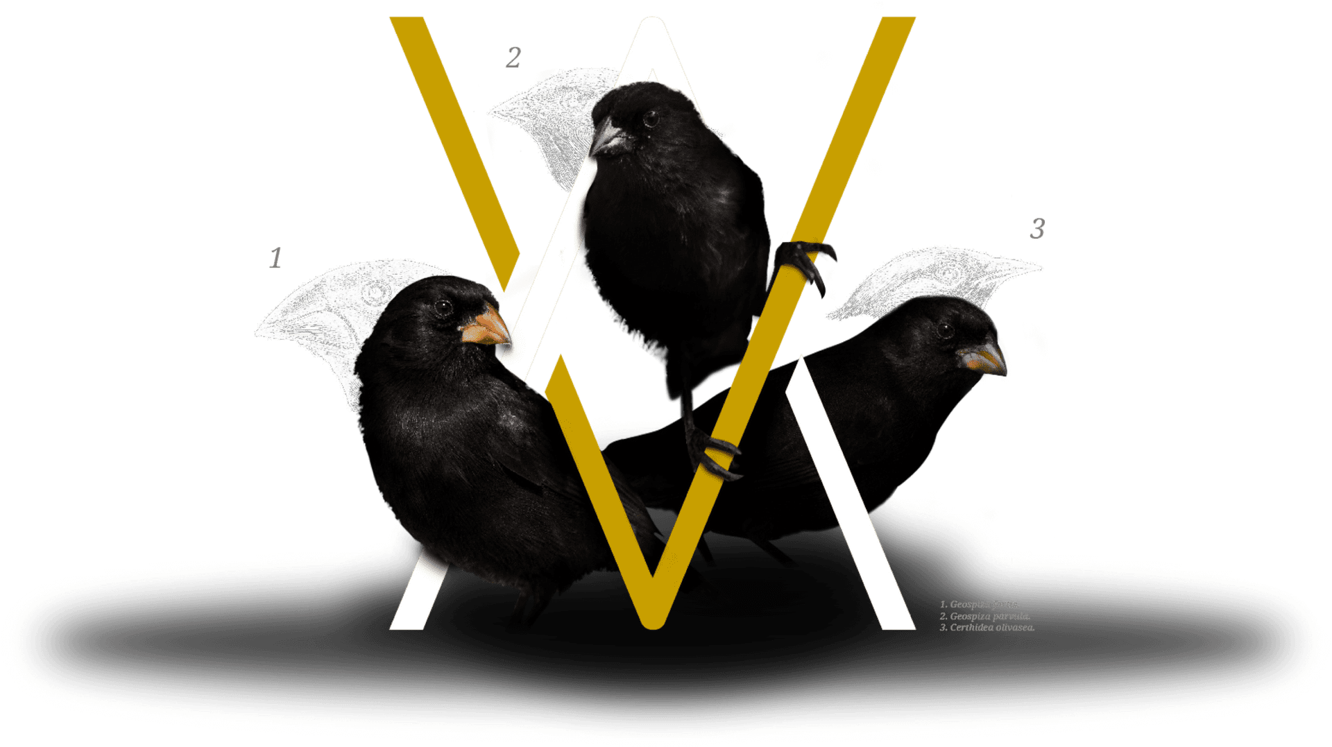 3 Darwin's Finches And Arcane Digital Marketing Agency Logo