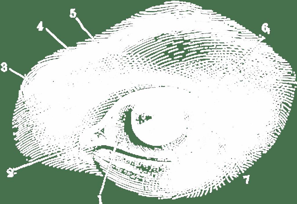 Diagram of Eye Representing Performance Creative